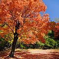 A Blanket Of Fall Colors by Amy Cicconi