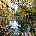 Alley With Falling Leaves In Fall Park by Michal Bednarek