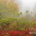 Autumn Fog Dolly Sods by Thomas R Fletcher