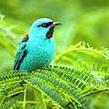 Birds by Kino /vwpics