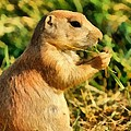 Black-tailed Prairie Dog by George Atsametakis