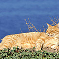 Cat In Hydra Island by George Atsametakis