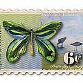 6 Cent Butterfly Stamp by Amy Kirkpatrick