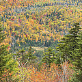 Colorful Fall Forest Near Rangeley Maine by Keith Webber Jr