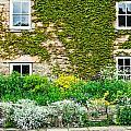 Cottage Garden by Tom Gowanlock