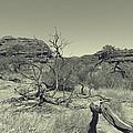 Dead Tree by Girish J