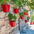 Flower Pots 2 by Roy Pedersen