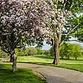 Forest Akers - Blooming by Gej Jones