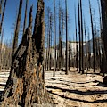 Forest Fire by Ashley Cooper