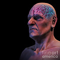 Geriatric Brain by Science Picture Co