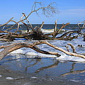 Hunting Island  by Mountains to the Sea Photo