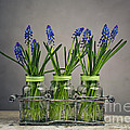 Hyacinth Still Life by Nailia Schwarz