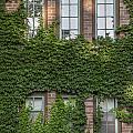 6 Ivy Windows by John McGraw