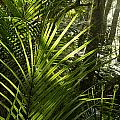 Jungle Light by Les Cunliffe
