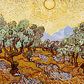 Olive Trees by Mountain Dreams