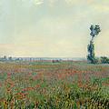 Poppy Field by Mountain Dreams
