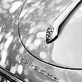 Porsche 1600 Super Hood Emblem by Jill Reger