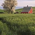 Red Barn by John Shaw