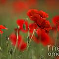 Red by Nailia Schwarz