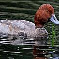 Redhead by Ira Runyan