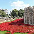 Remembrance Poppies At The Tower Of London by Julia Gavin