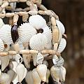 Sea Shell Decorations by Ali Mohamad