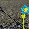 Smile Flower by Mats Silvan