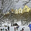 Snowboarding  In Central Park  2011 by Madeline Ellis