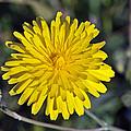 Spring Wild Flower by George Atsametakis