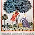 Tacuinum Sanitatis, Medieval Health by Prisma Archivo