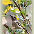 Thank You Card by Travis Truelove