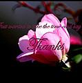 Thank You by Travis Truelove