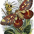 The Butterfly Vivarium by English School