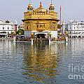 The Golden Temple At Amritsar India by Robert Preston