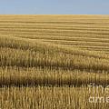 Tracks In Field by John Shaw