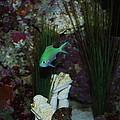 Tropical Fish by Robert Floyd