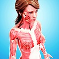 Female Musculature by Pixologicstudio/science Photo Library