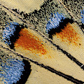 Close-up Detail Wing Pattern by Darrell Gulin
