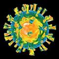 Virus by Mehau Kulyk