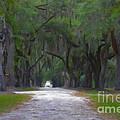 Allee Of Live Oak Tree's by Dale Powell