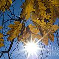 Autumn Leaves by Mats Silvan