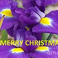 Christmas Card by Rod Ismay