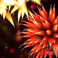 Fireworks Art by Benjamin Simeneta