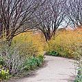 Garden Path by Tom Gowanlock