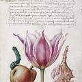 Illuminated Manuscript by Granger