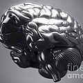 Metallic Brain by Science Picture Co