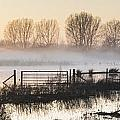 Panorama Landscape Of Lake In Mist With Sun Glow At Sunrise by Matthew Gibson
