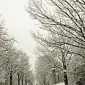 Snow Covered Road And Trees After Winter Storm by Alex Grichenko
