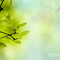 Spring Green by Nailia Schwarz
