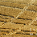 Tracks In Field by John Shaw